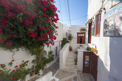 Idyllic way through cycladic white houses and pink flowers Royalty Free Stock Image