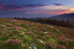 Idyllic wild flower meadow at mountain sunset Royalty Free Stock Images