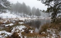Idyllic winter forest landscape at Troodos Mountains, Cyprus royalty free stock image
