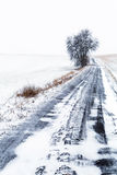 Idyllic winter meadow. With single tree Royalty Free Stock Photo