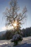Idyllic winter nature Royalty Free Stock Image