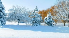 Idyllic Winter Scene royalty free stock images