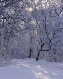 Idyllic winter scene in the woods with the sun shining through the trees onto the snow covered ground stock photography