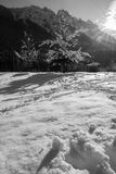 Idyllic winter scenery nude tree covered with snow in Julian Alps in black and white, Kranjska Gora, Slovenia. Idyllic winter scenery nude tree covered with snow Royalty Free Stock Image