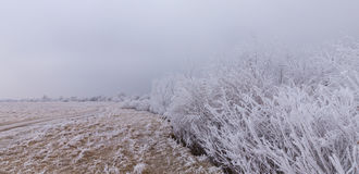 Idyllic winter scenery with trees covered by frost, along frozen river Royalty Free Stock Images