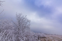 Idyllic winter scenery with trees covered by frost, along frozen river Stock Images