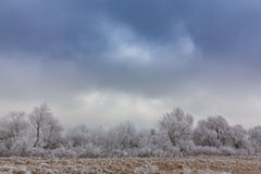 Idyllic winter scenery with trees covered by frost, along frozen river Royalty Free Stock Photos