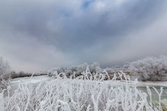 Idyllic winter scenery with trees covered by frost, along frozen river Stock Photography