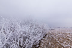 Idyllic winter scenery with trees covered by frost, along frozen river Royalty Free Stock Photography