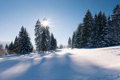 Idyllic winter snow landscape with forest and sun Stock Photos