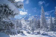 Idyllic winter Stock Photography
