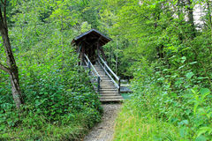 Idyllic wooden bridge in lush green forest Royalty Free Stock Photography