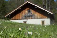 Idyllic wooden hut with fresh green grass Royalty Free Stock Images