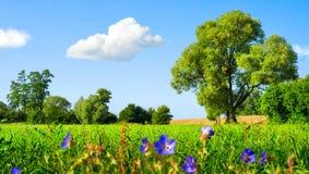 Idylliczna łąka przy ładną pogodą zdjęcia stock