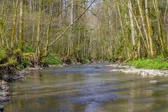 Idylliczna rzeka przy wiosna czasem Zdjęcie Royalty Free