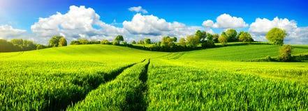 Idylliczni zieleni pola z wibrującym niebieskim niebem Fotografia Stock