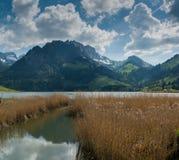 Idylliczny góra krajobraz w Szwajcarskich Alps z jeziorem i złota bagno trawa w przedpolu zdjęcie stock