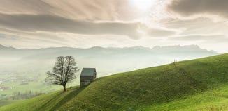 Idylliczny i pokojowy góra krajobraz z samotnym drzewo na trawiastym zboczu i i obraz stock