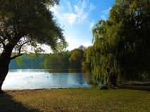Idylliczny jezioro w parku Obraz Royalty Free