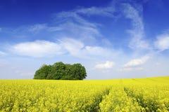 Idylliczny krajobraz, osamotniony cisawy drzewo w?r?d gwa?t?w poly obrazy royalty free