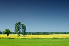 Idylliczny krajobraz, osamotniony drzewo wśród zielonych poly zdjęcia stock