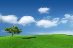 Idylliczny krajobraz, osamotniony drzewo wśród zielonych poly zdjęcia royalty free