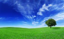 Idylliczny krajobraz, osamotniony drzewo wśród zielonych poly obrazy stock
