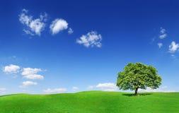 Idylliczny krajobraz, osamotniony drzewo wśród zielonych poly obraz stock