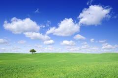 Idylliczny krajobraz, osamotniony drzewo w?r?d zielonych poly zdjęcia stock