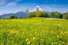 Idylliczny krajobraz w Alps z zielonymi łąkami i kwiatami zdjęcie royalty free