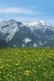 Idylliczny krajobraz w Szwajcaria obrazy stock