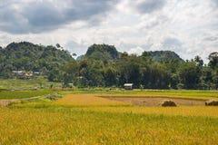 Idylliczny krajobraz w Taniec Toraja Obraz Royalty Free
