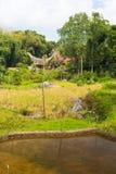 Idylliczny krajobraz w Taniec Toraja Fotografia Royalty Free