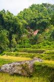 Idylliczny krajobraz w Taniec Toraja Zdjęcia Royalty Free
