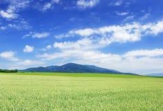 Idylliczny krajobraz, widok zieleni pola i niebieskie niebo, zdjęcie stock