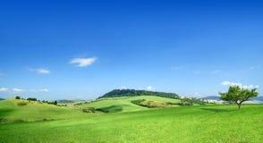 Idylliczny krajobraz, widok zieleni pola i niebieskie niebo, zdjęcie royalty free