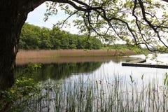 Idylliczny krajobraz z jeziorem i drzewem obraz stock