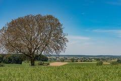 Idylliczny krajobraz z niebieskim niebem w Niemcy Bavaria zdjęcie royalty free
