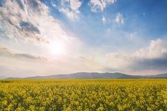 Idylliczny krajobraz z rapeseed polem na zmierzchu fotografia stock