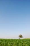 idylliczny krajobrazowy lato Obrazy Royalty Free