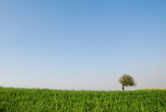 idylliczny krajobrazowy lato Obraz Royalty Free