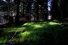 Idylliczny las w Marzec Obrazy Royalty Free