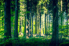Idylliczny las z polaną zdjęcia royalty free