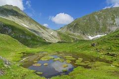 Idylliczny lato krajobraz z halnym jeziorem z spławowymi zielonej trawy wyspami zdjęcie stock