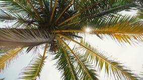 Idylliczny niskiego kąta tło w górę strzału piękny jaskrawy światło słoneczne osiąga szczyt przez kokosowych drzewko palmowe gałą zdjęcie wideo