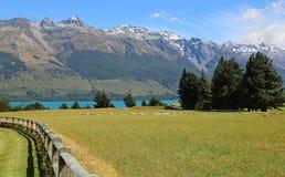 Idylliczny paśnik na Wakatipu jeziorze Zdjęcie Stock