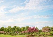 Idylliczny parka krajobraz z kwitnącymi krab jabłoniami obraz royalty free