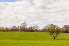 Idylliczny pole z drzewem Fotografia Stock