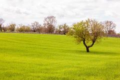 Idylliczny pole z drzewem Obraz Royalty Free