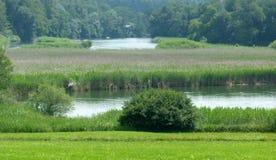 Idylliczny rzeka krajobraz z mnóstwo płochami zdjęcie stock